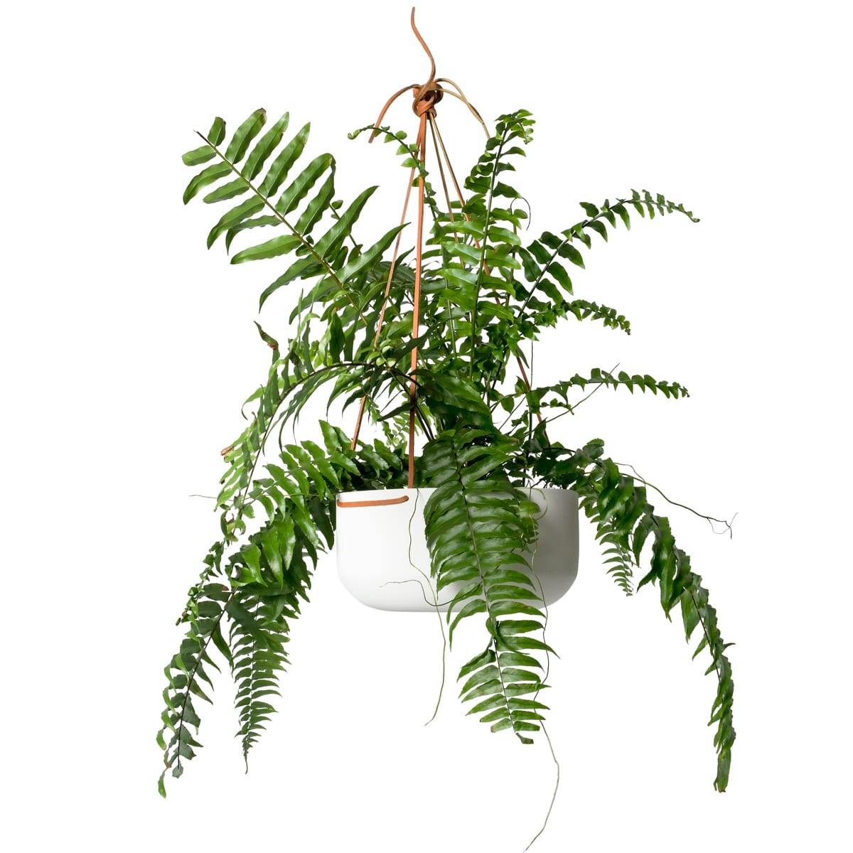 Image of: Hanging Planter Large In White With Leather Straps By Lightly Australia